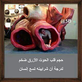 Pin By أفنان الحسني On معلومات عامه Arabic Quotes Quotes Arabic