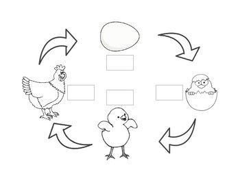 21+ Life cycle of a chicken coloring page HD