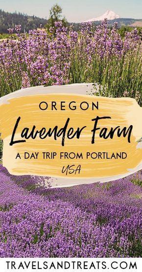 Portland Oregon Day Trip Hood River Lavender Farms Oregon Road