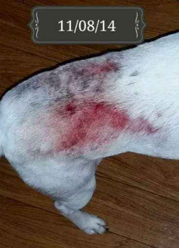 11 Years Of Dog Skin Problems Resolved For Chilli Skin Problems