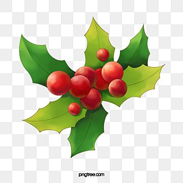 Christmas Nativity Scene Red Green Holly Mistletoe Clipart Holly Christmas Png Transparent Clipart Image And Psd File For Free Download Christmas Nativity Scene Mistletoe Clipart Christmas Nativity