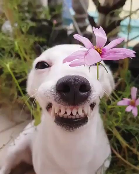 Happy Friday 🌸😃 #dogs #doglovers #funnydogs #cutedogs #puppy #puppies #cute #funny #love