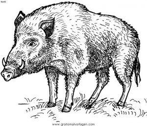 Wildschweine Ausmalbilder Ausmalbilder Wildschweine Wildschwein Tier Schablone Schwein Illustration