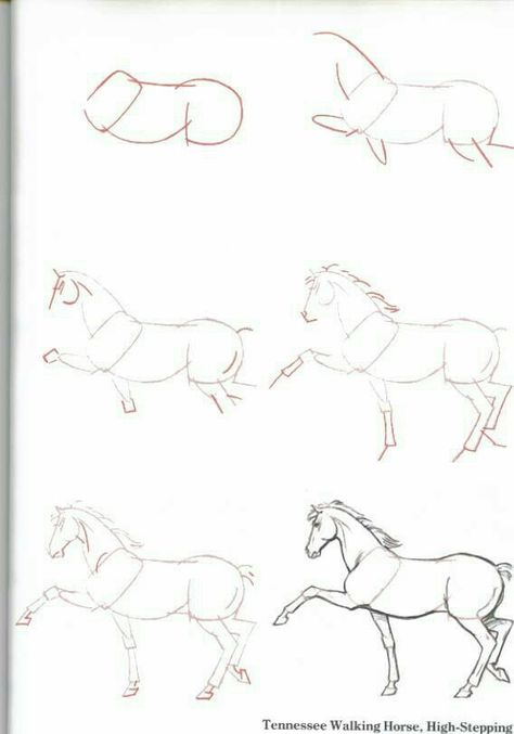 89 zum abzeichnenideen  malvorlagen pferde pferde