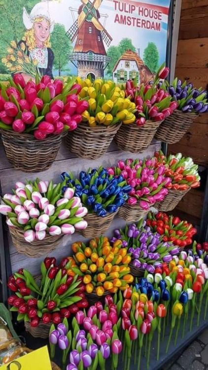 Tulips Of Many Colours For Sale Made Out Of Wood Beautiful Flowers Tulips Pretty Flowers