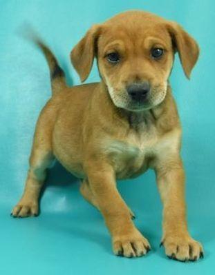Morton Grove Il Beagle Meet Tate A Pet For Adoption Beagle