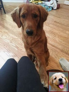 1 Have Dog Behavior Problems Learn About Dog Behavior Specialist