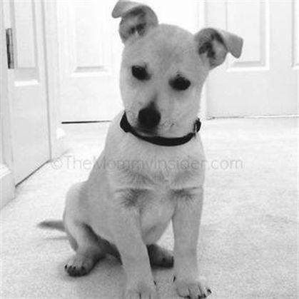 Therapy Dog In Training Dog Training Yelp Dog Training 32086