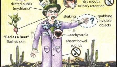 Cholinergic Toxidrome Litfl Toxicology Flashcards Anatomia Y