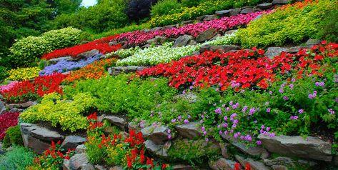 How to Start a Flower Garden: 3 Steps for Beginners