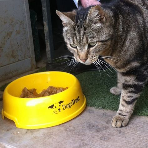 Cat Is First Resident At Dogs Home Dogs Trust Dogs Cutest