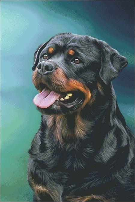 Pin By Dog Portraits On Mastiff Dogs Art Dog Breeds Rottweiler