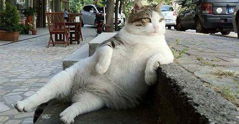 Facebook: statua per Tombili, il gatto più rilassato del mondo