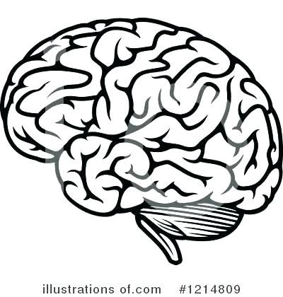 Brain Coloring Page Sheet Ask A Biologist Human Ideas Pages Book B Brain Illustration Brain Art Drawing Brain Drawing