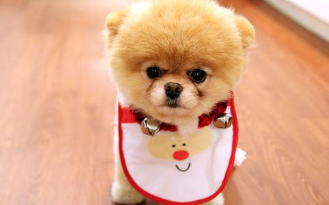 Please Visit Our Website Dogs Dog Breeds Puppies Dog Toys