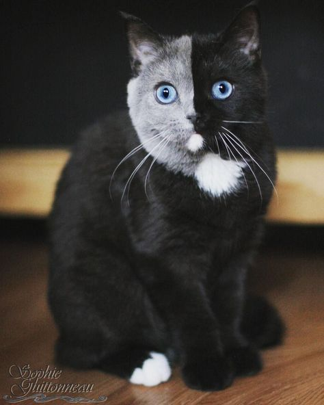 """Photo of Adorable Kitten Born With a Rare """"Two Face"""" Has Grown Into a Striking Cat"""