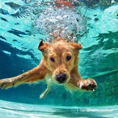 Bora Mergulhar nas Oportunidades?  #dogswimming #dog #dogsofinstagram #dogs #doglife #doglover #dogstagram #dogswim #puppies #waterdog #swim #lovedogs #doggo #dogphotography #of #dogadventures #caninehydrotherapy #doglove #doggie #swimming #swimmingdog #germanshepherd #lake #dogsthatexplore #puppy #dogsthatswim #dogsinwater #pet #doggy #bhfyp