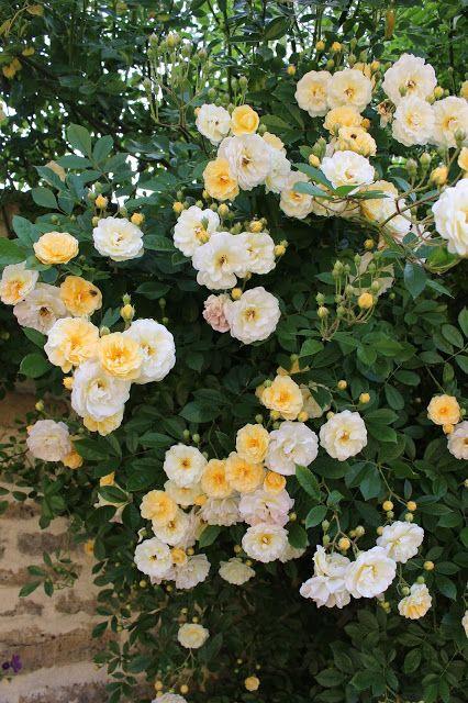 Les roses du jardin secret: Ghislaine de feligonde. Turbat 1916.