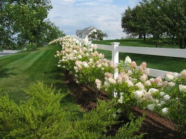 Beautiful farmhouse fence lined with hydrangea.