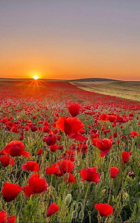 Sunset  #HappyFriday