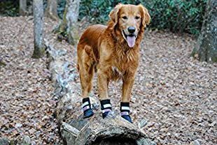 These are the best dog collars if you're looking to begin leash training. or need to correct behavior. #LoveYourDog #DogHikingBoots #DogBoots #BestDogBoots #HikingWithDogs #Dog #Dogs #OutdoorDog.
