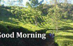 Good Morning Kerala Nature Images Good Morning Photos Good Morning Images Download Good Morning Wallpaper
