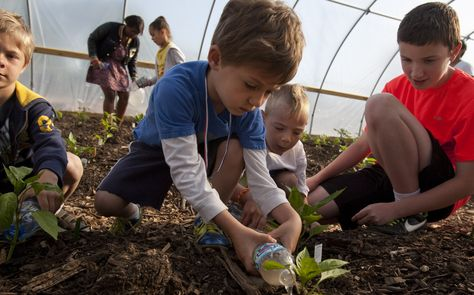 With Growing Power support, student gardening takes root