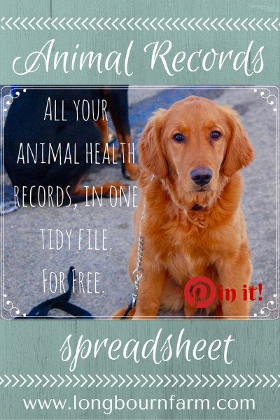 Free Animal Records Spreadsheet Animal and Dog