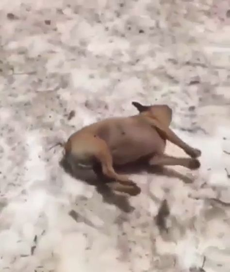 I can't stop watching this😂 #dogs #dog #animals #animal #pets #adorable #pet #puppy #videooftheday #puppies puppy, dogs, dog, pets, pet, puppie, adorable, animals, animal, puppies