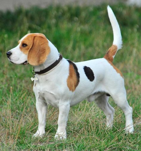 The Best Boy Dog Names List With Meanings With Images Dog Names Boy Dog Names Beagle Puppy