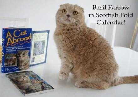 Dancing Club Bar 54 Ideas Cat Scottish Fold Scottish Fold Scottish Fold Kittens