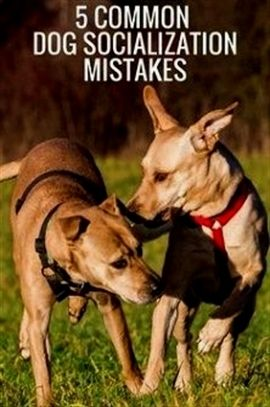 Dog Training Shock Collar Dog Training 101 Videos Service Dog