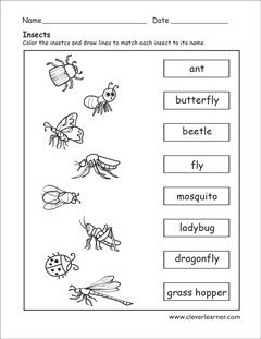 Label The Insects Preschool Worksheet Preschool Worksheets Insect Worksheets Preschool Insects Preschool Pre k science printable worksheets