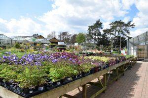 طرق زراعة اسطح المنازل Cultivation Method Rooftops Hydroponic Gardening Hydroponics Plants