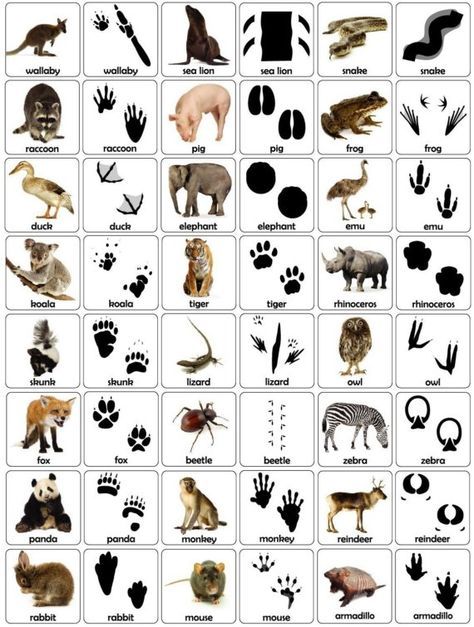 Animal Tracks Let's make a match a matching game by doggiepiggie Survival Life Hacks, Survival Skills, Wilderness Survival, Camping Survival, Animal Footprints, Animal Tracks, Activities For Adults, Animal Silhouette, Educational Games