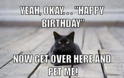 Pin On Funny Happy Birthday Cat Memes