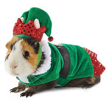 Merry Bright Elf Small Pet Costume Small Pet Small Pet Costumes Petsmart Pet Costumes Elf Pets Small Pet Costumes