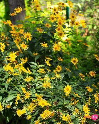 Cieniolubne Kwiaty Balkonowe Co Posadzic Na Balkonie Polnocnym I Wschodnim Zielony Ogrodek