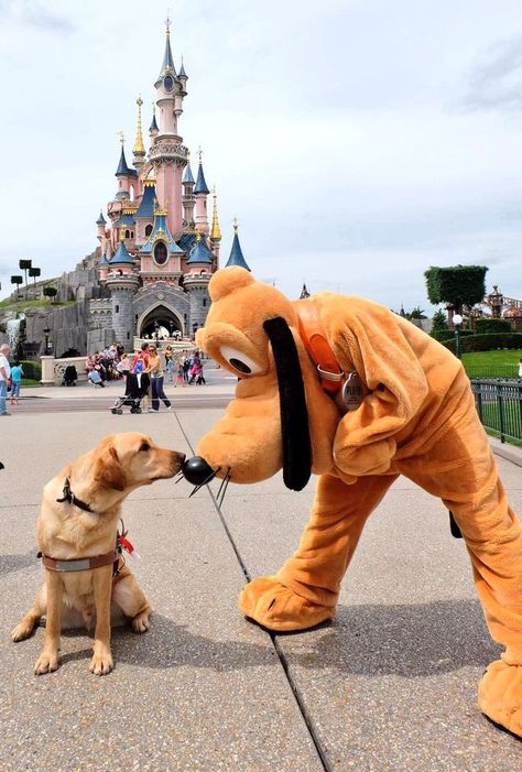 Dog Discover Disneyland Paris - Hints & Tips Shortcuts There are several paths and walkways which are hardly ever used by guests because they dont appear on the overly simplified park maps or theyre not easily seen. Some of them are covered. Cute Funny Animals, Cute Baby Animals, Disney Dogs, Disney Parks, Disney Land, Disney Disney, Disney Trips, Disney Aesthetic, Cute Dogs And Puppies