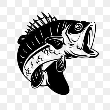 Detailed Bass Fish Illustration For Fishing Bass Fish Fishing Png And Vector With Transparent Background For Free Download Fish Illustration Fish Vector Fish Background