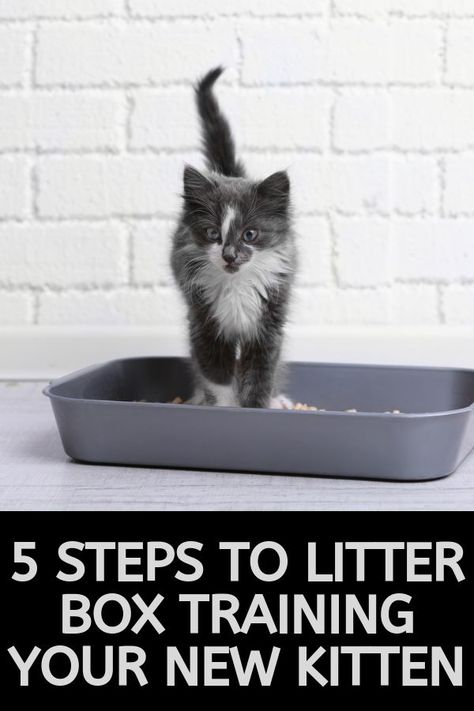 5 Simple Steps To Litter Train Your New Kitten Litter Training Cat Training Kittens