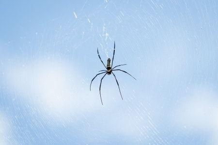 8723d7ac8734dc144d0d9fc8a7d5ddf7 - How To Get Rid Of A Spider Infestation Outside