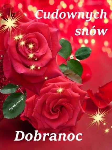 Pin By Wanda Swoboda On Dobranoc Flowers Rose Plants