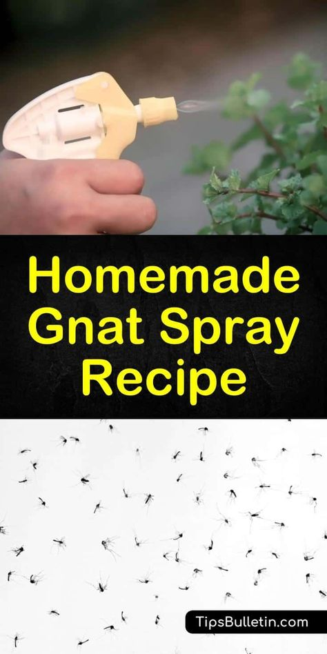 Homemade Gnat Spray Recipe - What Can I Spray to Get Rid of Gnats? An infestation of gnats in your house can be extremely annoying. Learn how to make a homemade gnat spray to eliminate these pests for good. Plant Bugs, Plant Pests, Garden Pests, Container Plants, Container Gardening, Gnat Repellant, Insect Repellent, Getting Rid Of Nats, Home Design