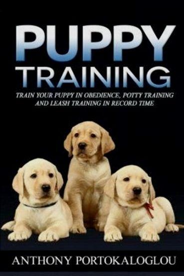 Service Dog In Training Dog Training Vest Small Dog Training