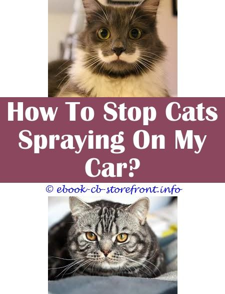 10 Refined Clever Ideas Detangle Spray For Cats Cat Calming Spray Nz Spray That Deters Cats Older Male Cats Spraying Skunk Spray Cat Cleaning Admirable