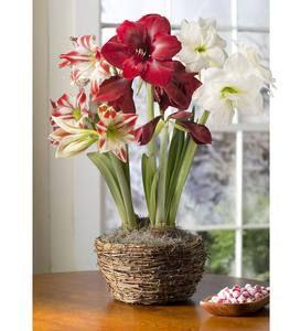 Assorted 19 Bulb Flower Bulb Gift Garden Plowhearth Flower Bulb Gifts Bulb Flowers Garden Bulbs