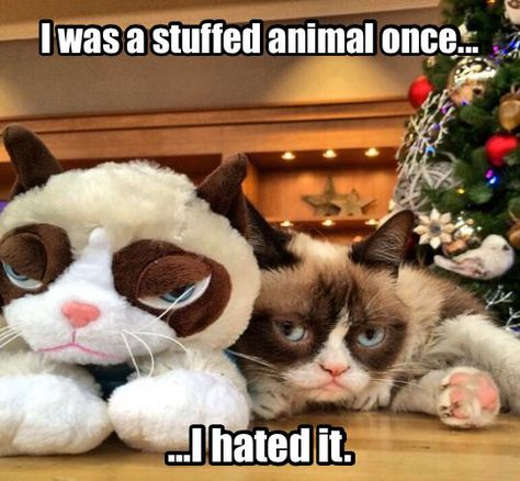 Christmas In July Cat Meme.Don T Even Think About Trying To Cuddle Me Grumpy Cat
