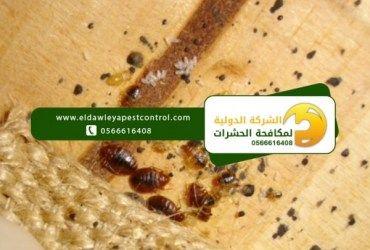 Pin By Eldawleya Pestcontrol On Https Www Eldawleyapestcontrol Com Food Bread Matzo