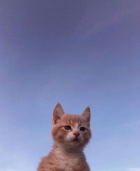Animals And Pets, Funny Animals, Cat Aesthetic, Cute Little Animals, Cute Creatures, Cats And Kittens, Orange Kittens, Kittens Cutest, Cute Cats